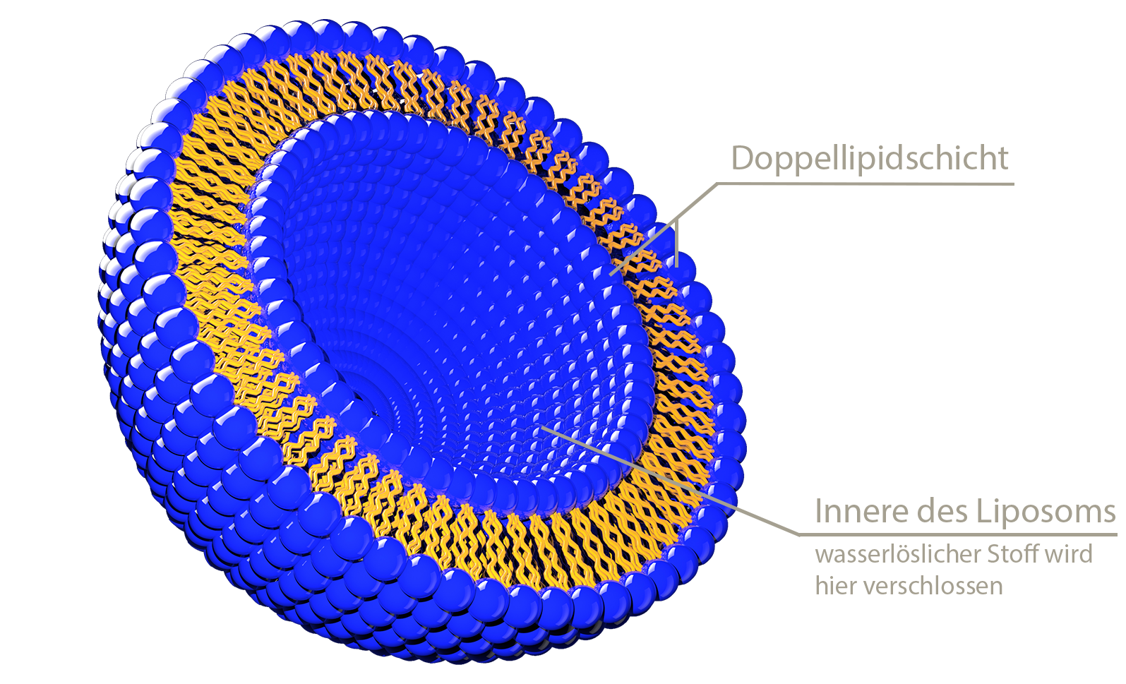 Abbildung Liposom